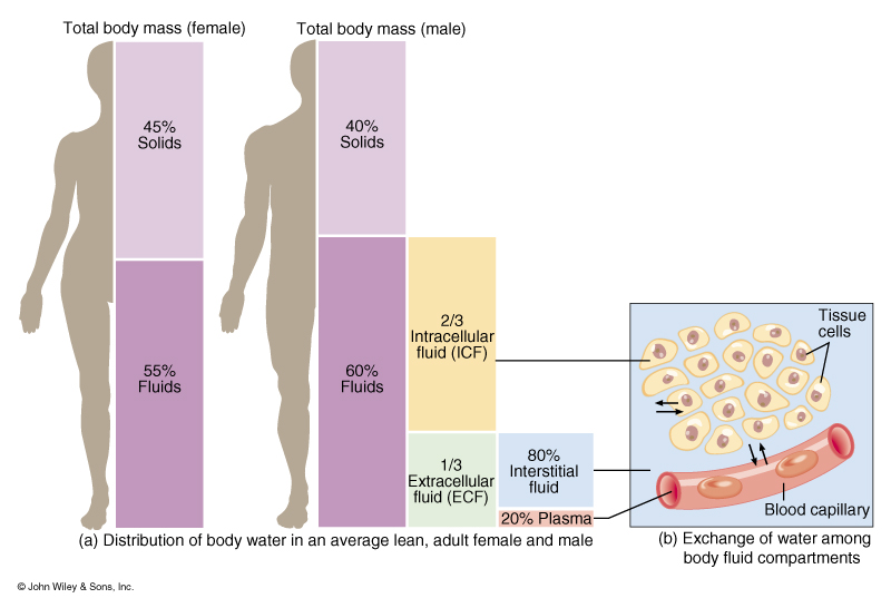 the effects of different body fluids Of the diastases in the blood, the lymph, and the other body fluids    -       _  _  _  _      2 the effect of lymphagogues on the concentration of the diastases.