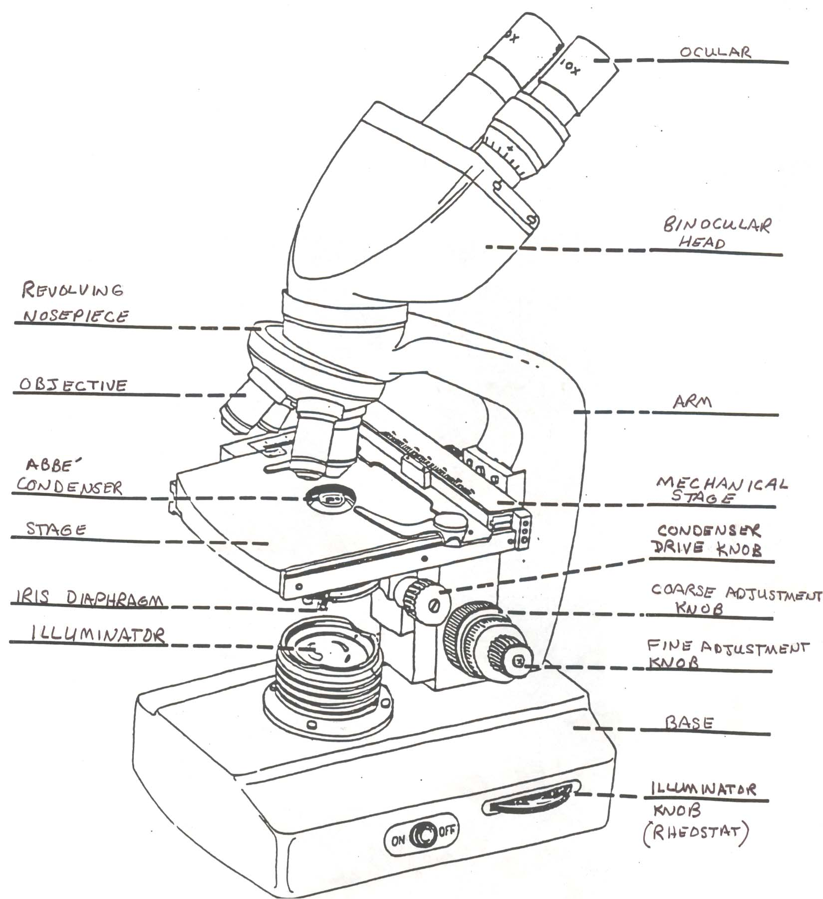 Microscope Drawing Worksheet microscope drawing labeled